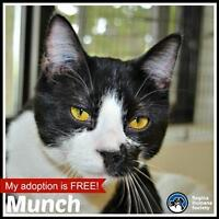 """Young Male Cat - Domestic Short Hair: """"Munch"""""""