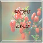 Begonia Jewels