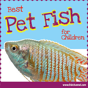 Used aquarium 30 to  50 gallons for kids' fish