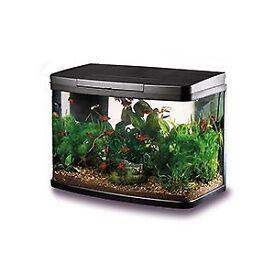 Panorama fish tank