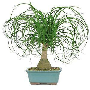 house plant seeds - House Plants