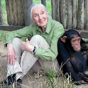 JANE GOODALL TICKET! Up front in Hamilton April 11