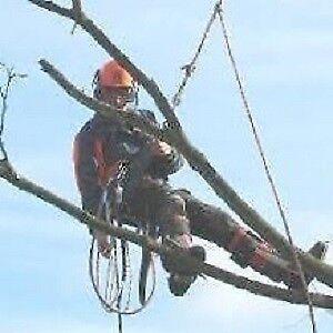 Wendigo Tree and Landscape Services