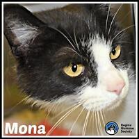 "Adult Female Cat - Domestic Short Hair: ""Mona*"""