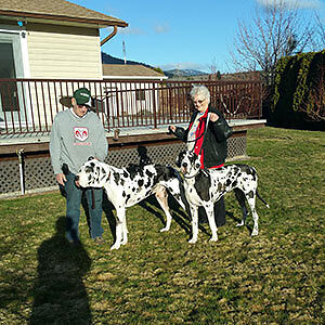 Great Danes pups almost ready to go