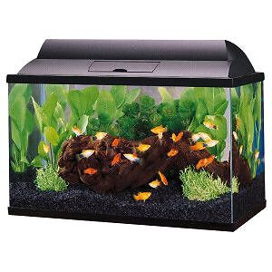 Looking for a 5 or 10 Gallon Aquarium with Lights and Lid