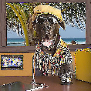 GOING ON VACATION ??? dog boarding $17day includes overnite