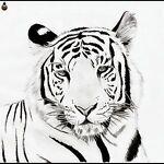 tigertowntreasures