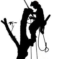 Tree Removals and Pruning