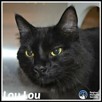 "Young Female Cat - Domestic Short Hair: ""Lou Lou"""