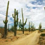 Deserttradingco