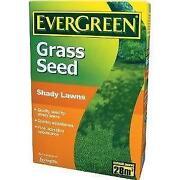 Evergreen Grass Seed