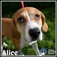 "Baby Female Dog - Coonhound: ""Alice*"""