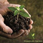 OrganicallyGarden