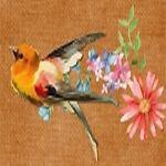 The Insightful Birdie