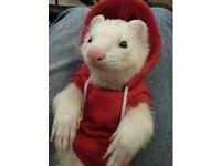 Ferret jumper / hoodie