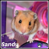 """Adult Female Small & Furry - Hamster: """"Sandy*"""""""