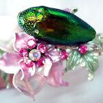 Jewel beetle wings supplies