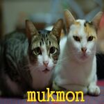 mukmon