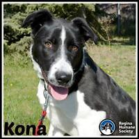 "Young Female Dog - Border Collie: ""Kona"""