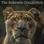 The Boegner Collection