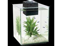 Fluval chi 19 full fish tank set up