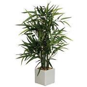 Bambus Pflanze