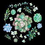 Ribble Plants