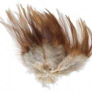 Long Rooster Feathers