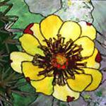 Desert Bloom Sales