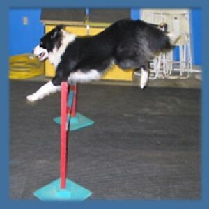 Indoor Obedience or Agility Classes