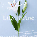 lily.blanc Beauty
