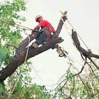Tree Removal/Limbing/Insured/Free Quotes