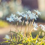Jane Eyre Gardens