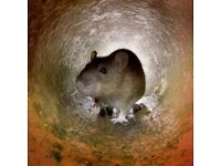 Able2 Pest Control Services low cost fast response !!!