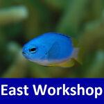 East Workshop