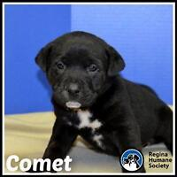 "Baby Male Dog - Shepherd: ""Comet*"""