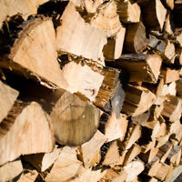 Need your winter wood cut? Need some trees cut down? Call Tim!