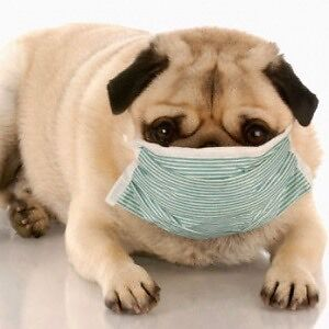 Want to say goodbye to pet odour?? Windsor Region Ontario image 1
