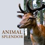 AnimalSplendor