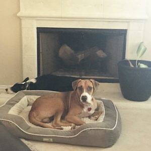 Ricky is a 2 – 3 yr old, male, beagle mix