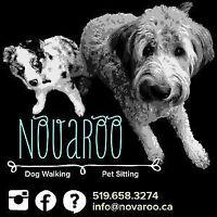Kitchener/Waterloo Dog Walker & Pet Sitter (NovaRoo)