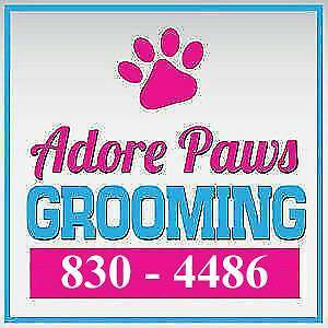 Adore Paws Grooming! Dog's and Cat's!