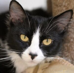 MEOW Foundation's lovable Neve looking for purrfect family!