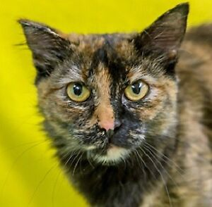 Meow Foundation's magnigicent Michelle looking for purrfect home