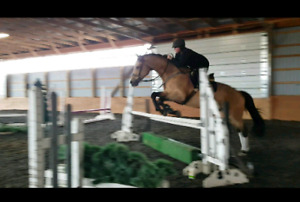 Hunter mare for partboard or lease