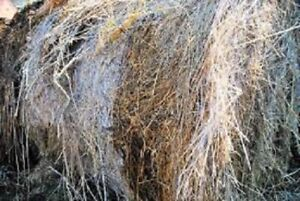 Compostable material - Hay/Straw/Leaves