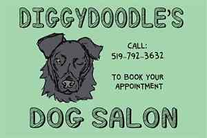 XMAS BATH AND TIDY DOG GROOMING SPECIAL ONLY $35