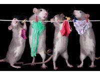 Mairis Rat Rescue