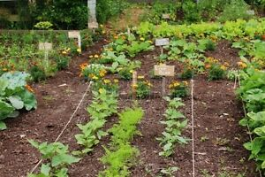 Tips To Get Your Vegetable Garden Ready